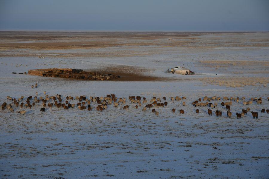 Дорноговийн малчид өмнөд хөршид 1000 хонь хандивлав